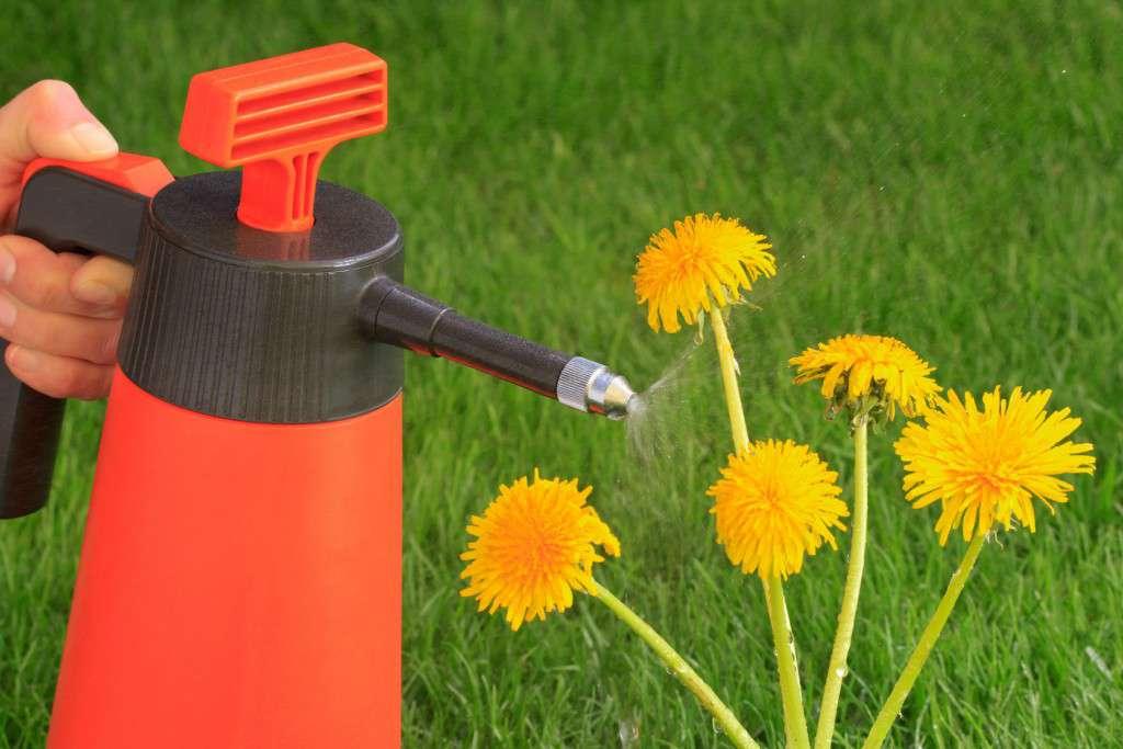 Unkrautbekmpfung mit Herbizide - Spritzmittel, Pflanzenschutzm