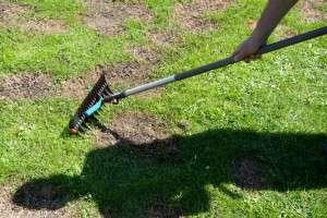 Rasenpfelge – so beugen Sie Unkraut vor