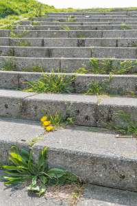 Concrete stairs in the sunlight with a yellow flowering dandelion and various other types of weeds on the steps.
