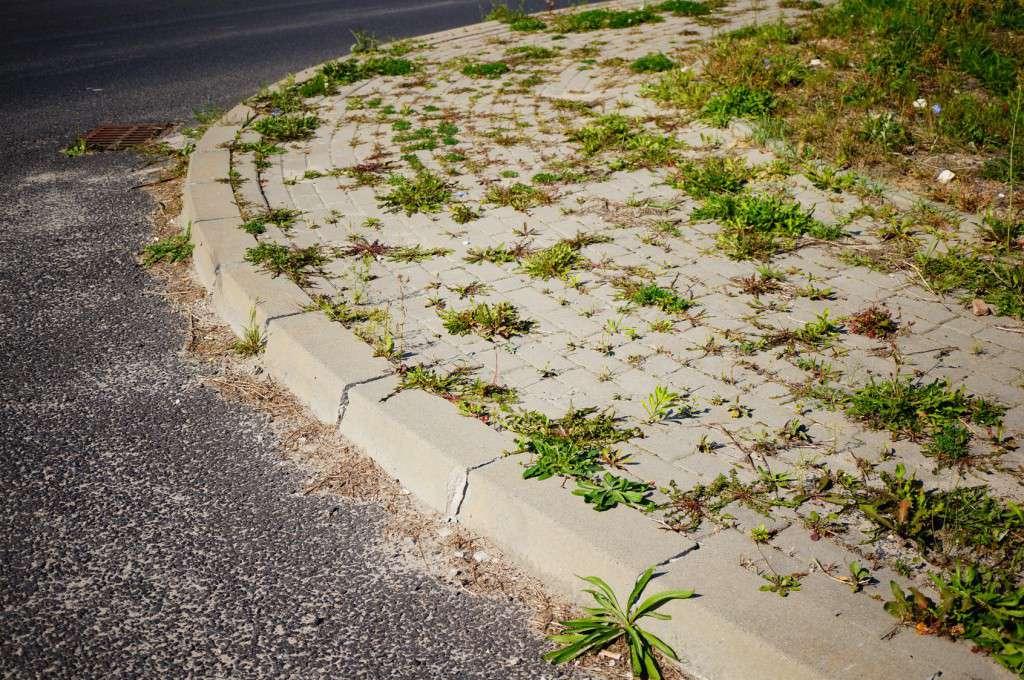 Sidewalk with weeds